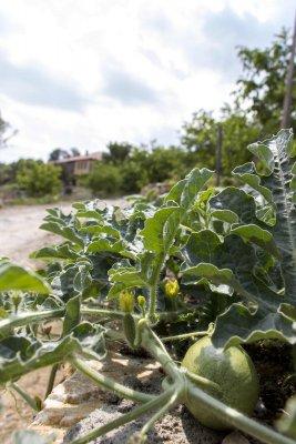 KTIMA BELLOU ORGANIC FARM