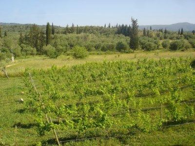 AROGGIA ORGANIC FARM