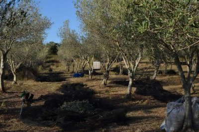 BIOPOROS ORGANIC FARM