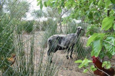 Αγροτουριστικό κατάλυμα στη Κέρκυρα BIOPOROS ORGANIC FARM